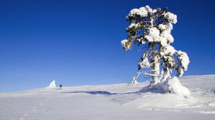 La raquette à neige