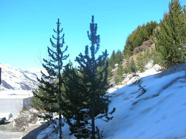 Location au ski Studio cabine 4 personnes (106) - Residence Gentianes - Les Menuires - Baignoire